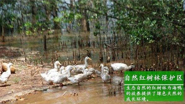 【海鴨蛋批發網】提供海鴨蛋的批發價格,及什么是烤海鴨蛋